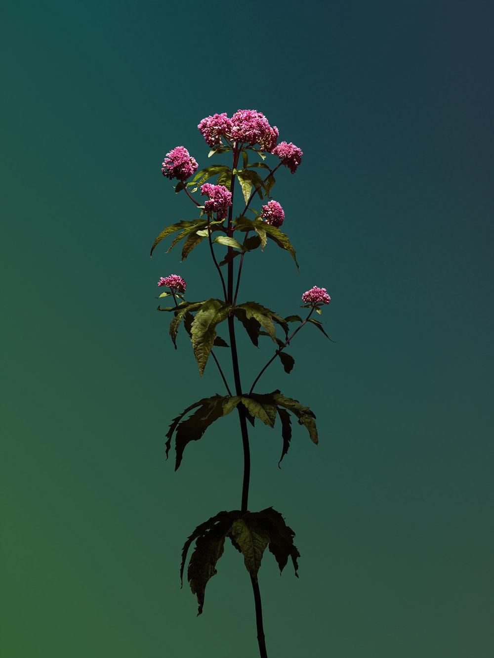 flowerb.jpg