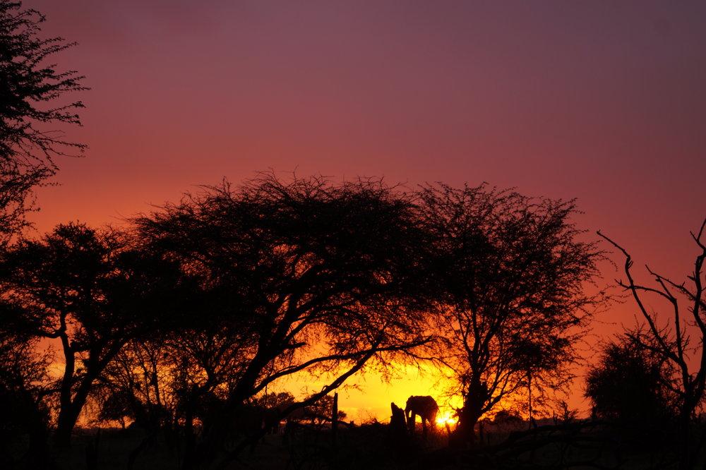 The Matabele Experience -