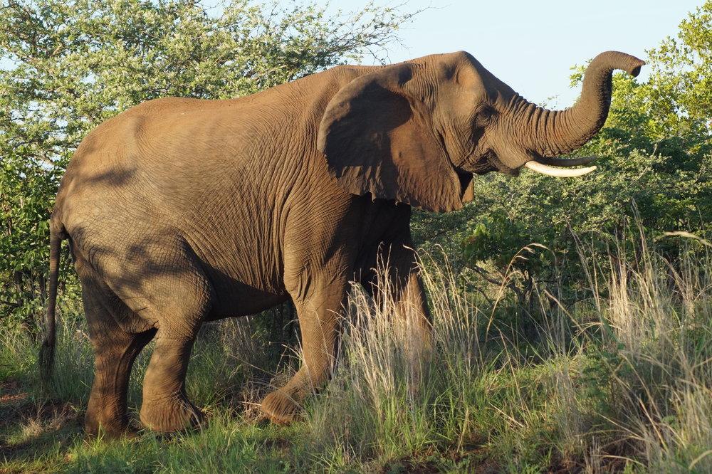 The Zambezi Experience -