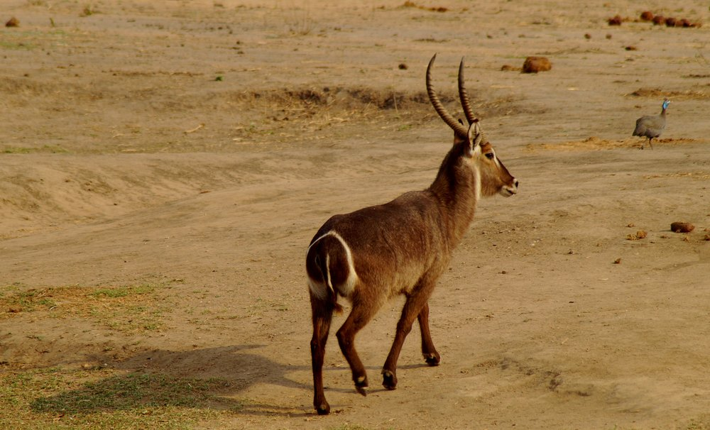 Half & Full Day Safari -
