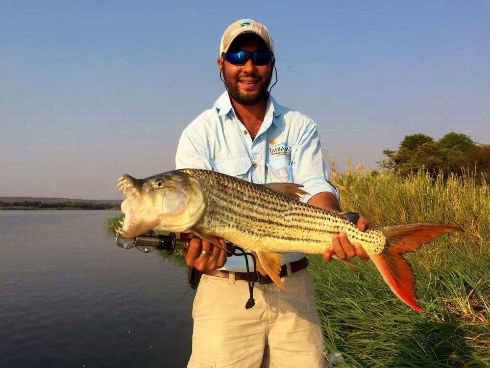 Tiger Fish on the Upper Zambezi