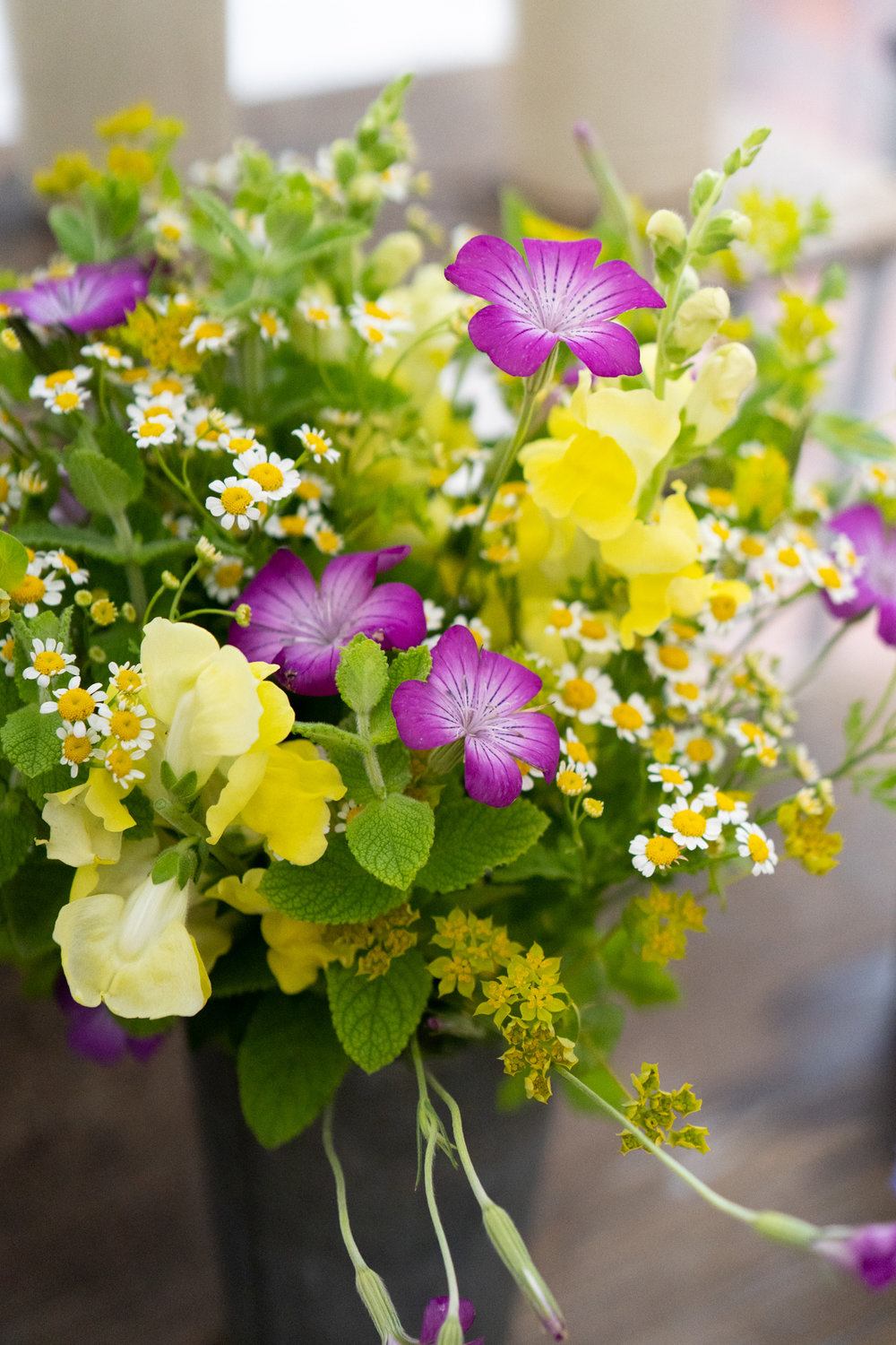 PFM_longview_flowers-1.jpg