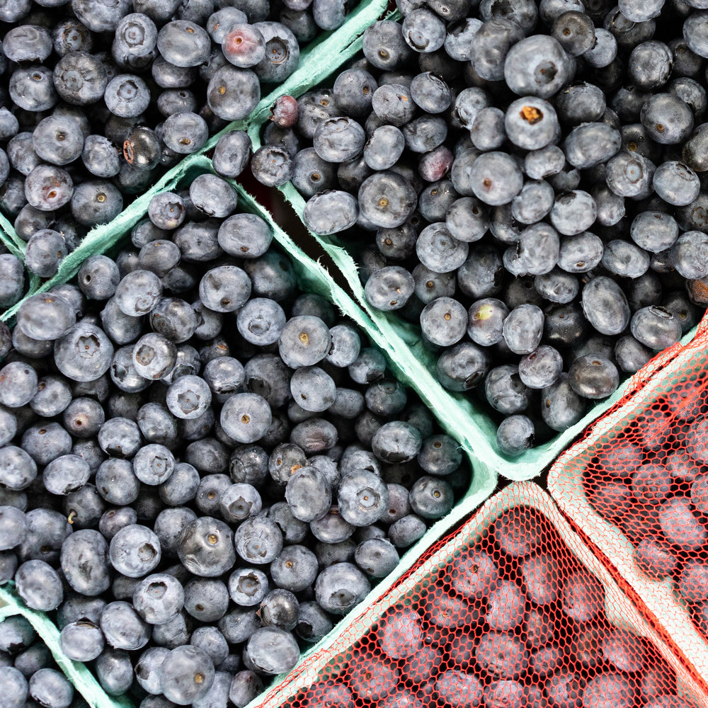 PFM_Terhune_blueberries-1.jpg