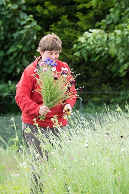 Claire picking cornflowers.jpg