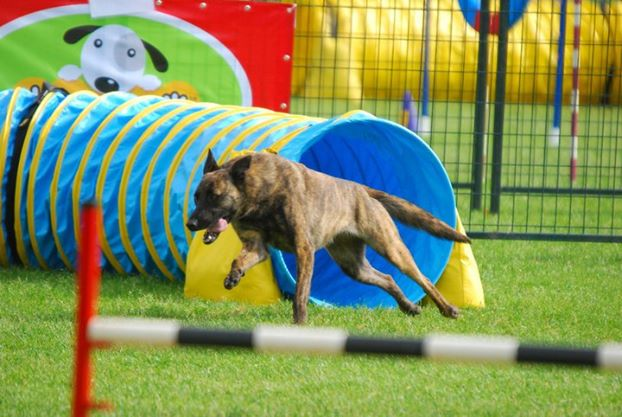 TRAINING CLASSES   We offer beginner, intermediate, and advanced agility classes.   Learn more   .