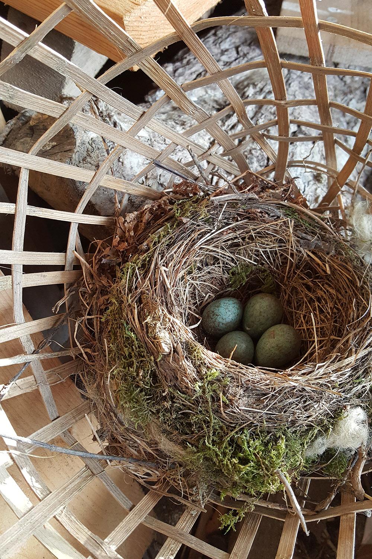 Birds nest_20170501_173537_001_1500px.jpg