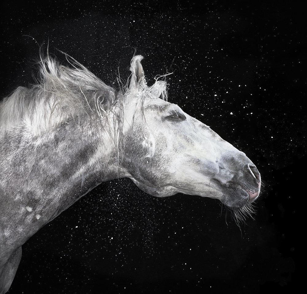 Froth horse.jpg