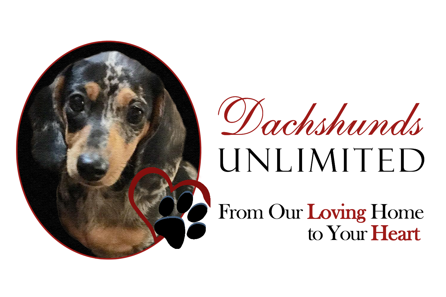 Dachshunds Unlimited