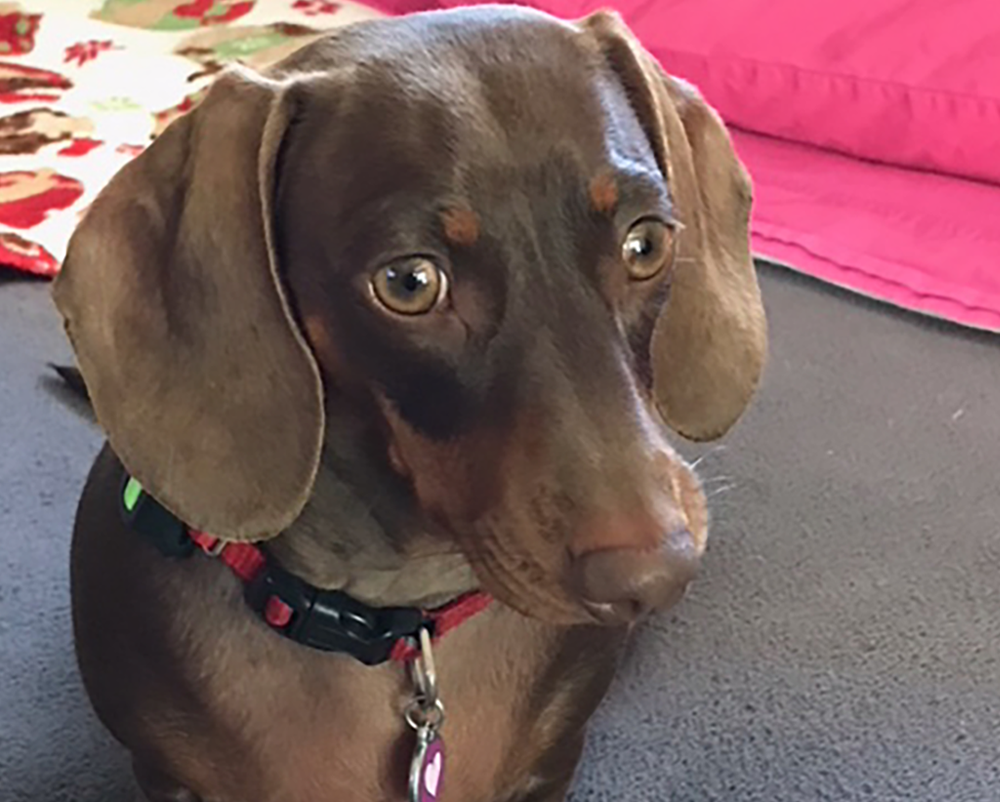 Dachshunds Unlimited-Forever Home-25.png