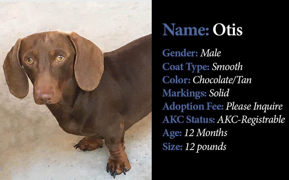 DU-Available Older Puppies-Otis.png