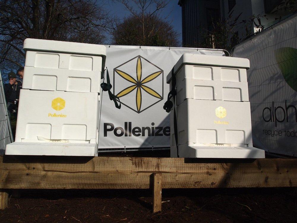 Pollenize-Kings.jpg
