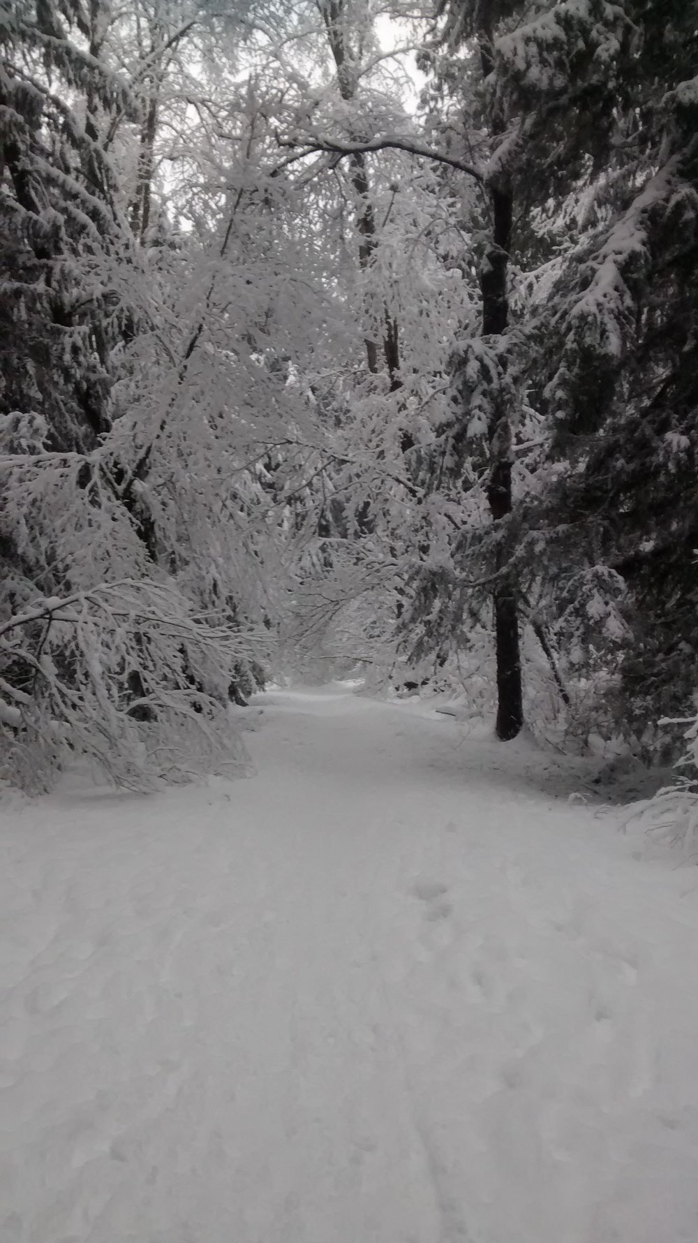 winterwonderland2016_viii.jpg
