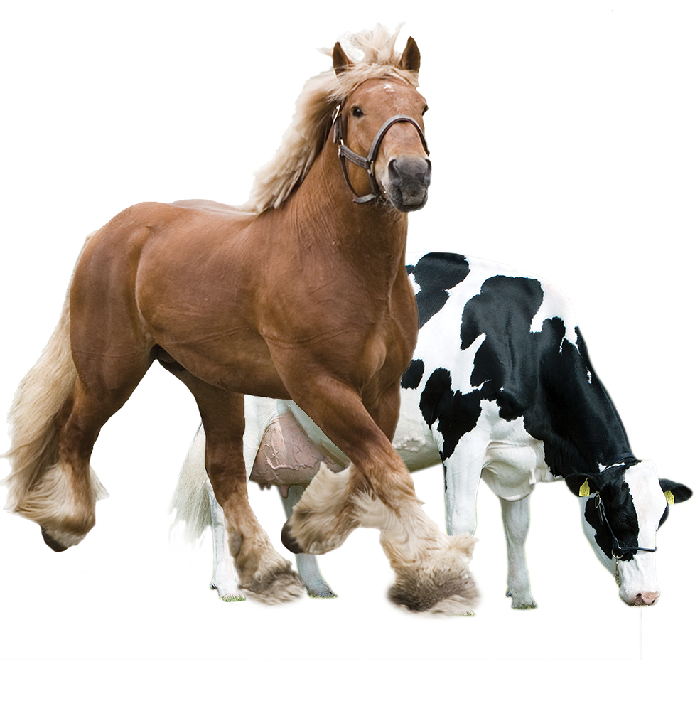 Horse&Cow.png