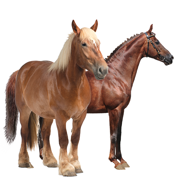 ProductAnimals-Horse-transparent.png