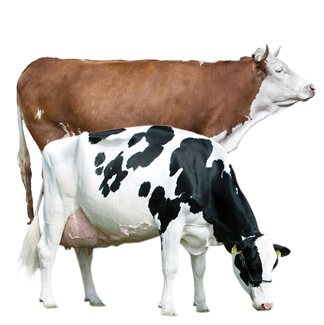 ProductAnimals-Layout-Cow-transparent.png