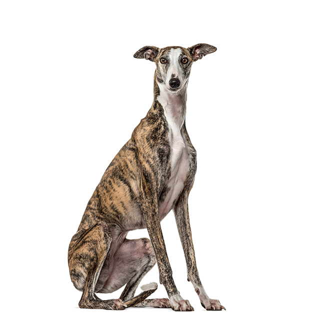 ProductAnimals-Layout-Dog-transparent.png