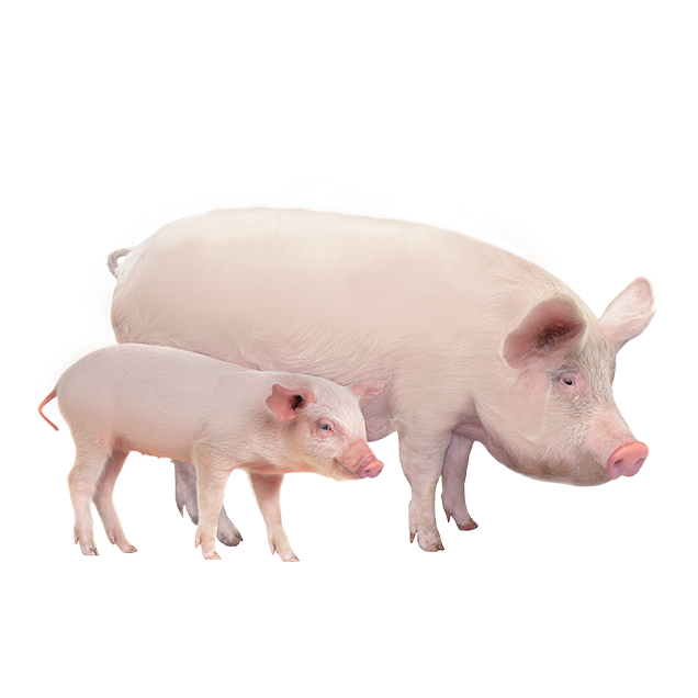 ProductAnimals-Layout-Swine.png