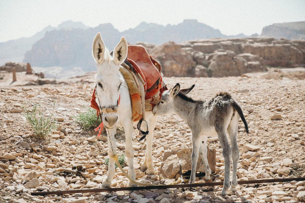 Lil baby donkey!!! Ahh!