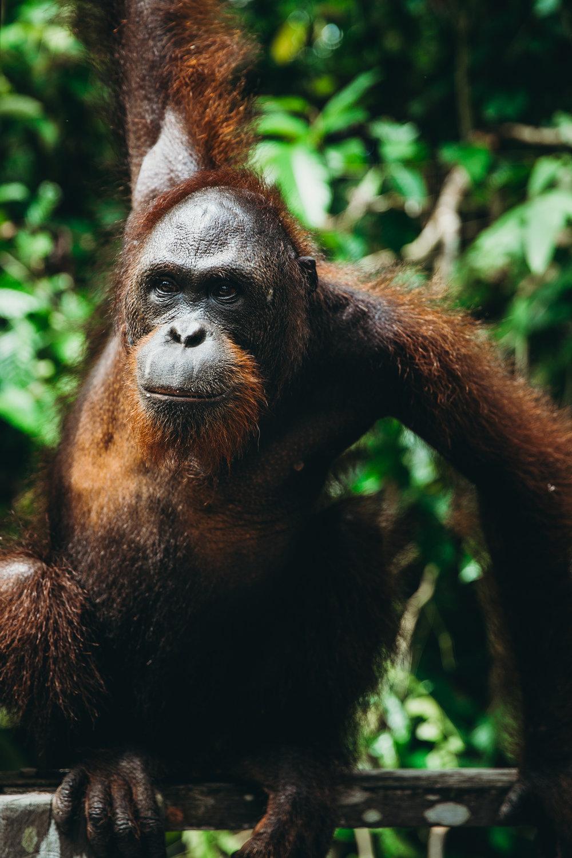 Borneo_HBGOODIE2018 (36 of 38).jpg