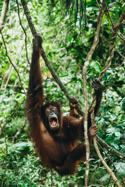 Borneo_HBGOODIE2018 (37 of 38).jpg