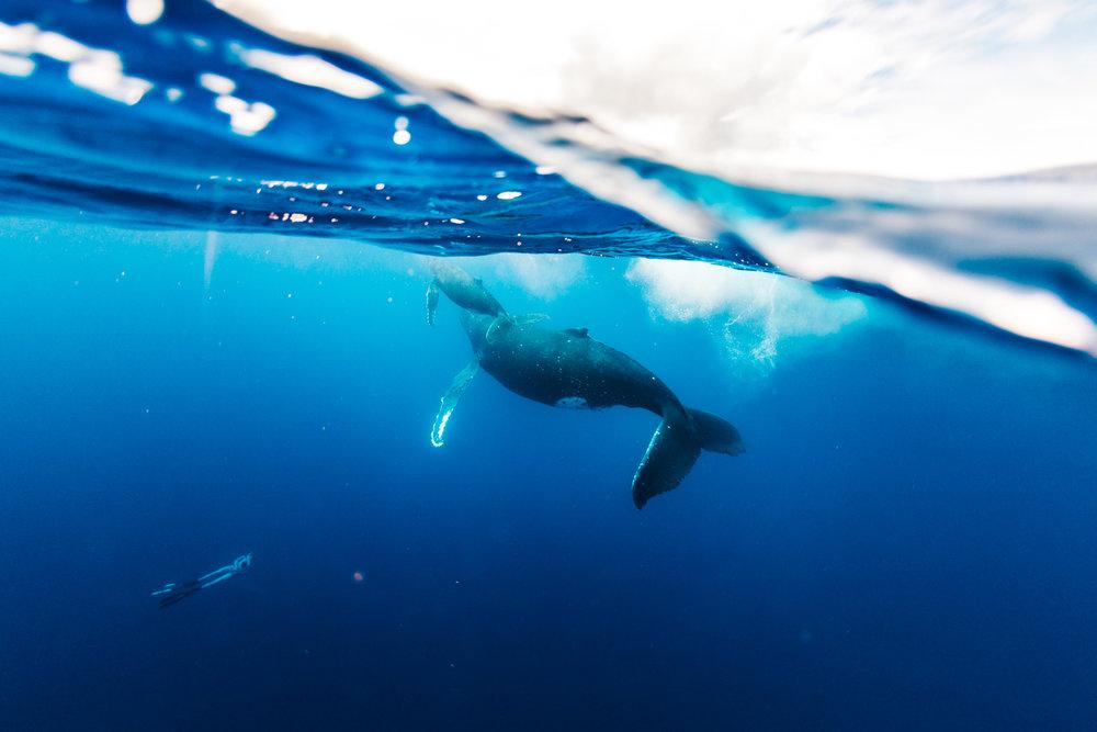 Tahiti_HBGOODIE2018 (17 of 82).jpg