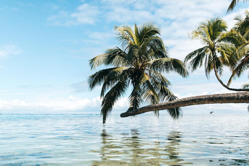 Tahiti_HBGOODIE2018 (22 of 82).jpg