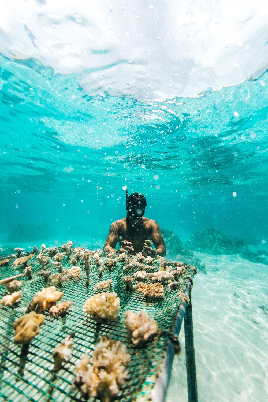 Tahiti_HBGOODIE2018 (59 of 82).jpg