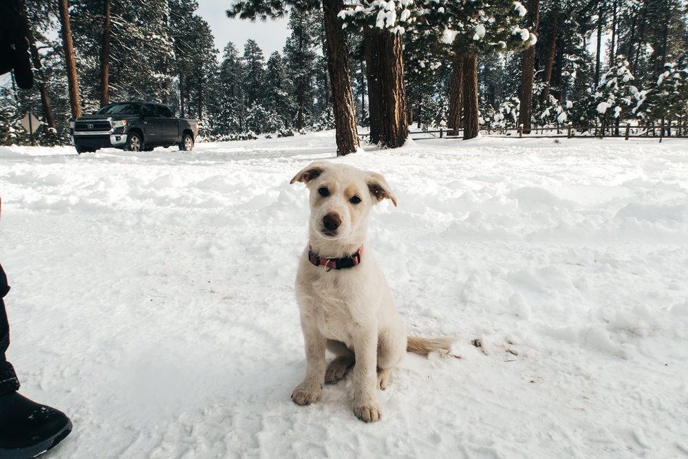 Baby puppy Snow in the snow