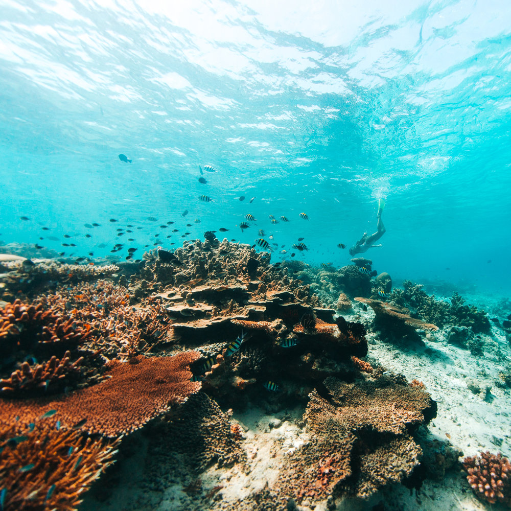 Coral Reef in Borneo Malaysia Underwater Photography