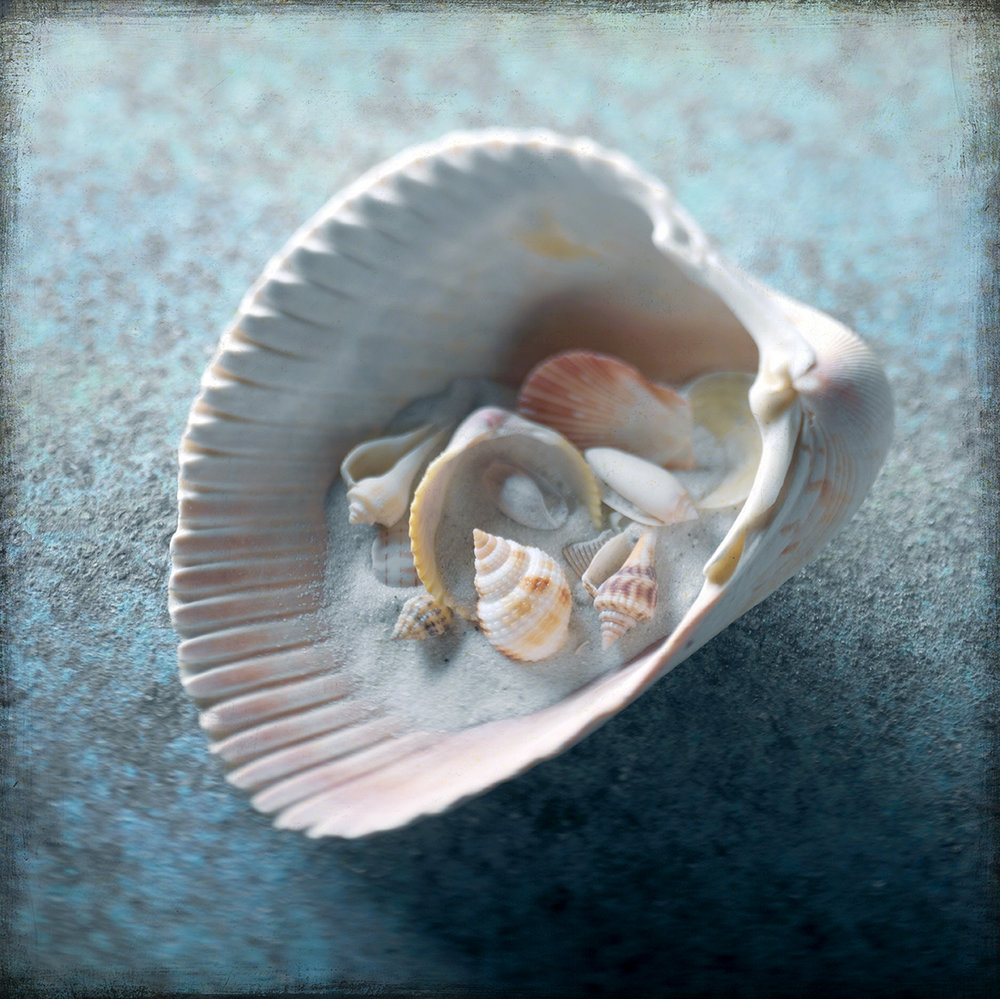 Shells Gallery