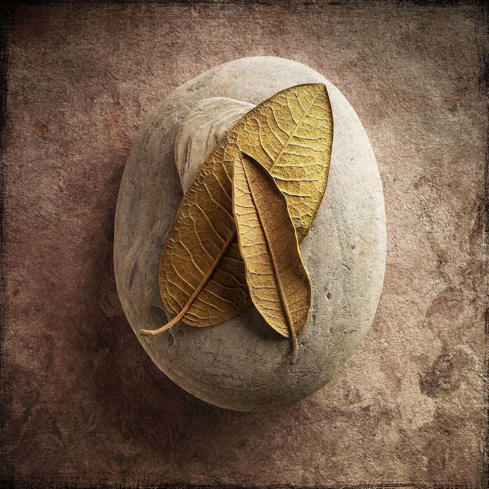 Two Leaves Two Stones