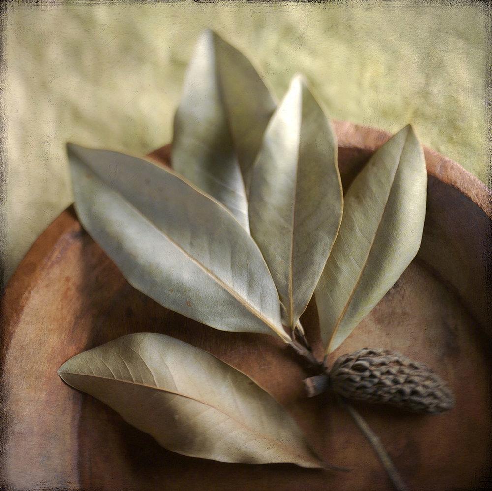 Magnolia In Bowl