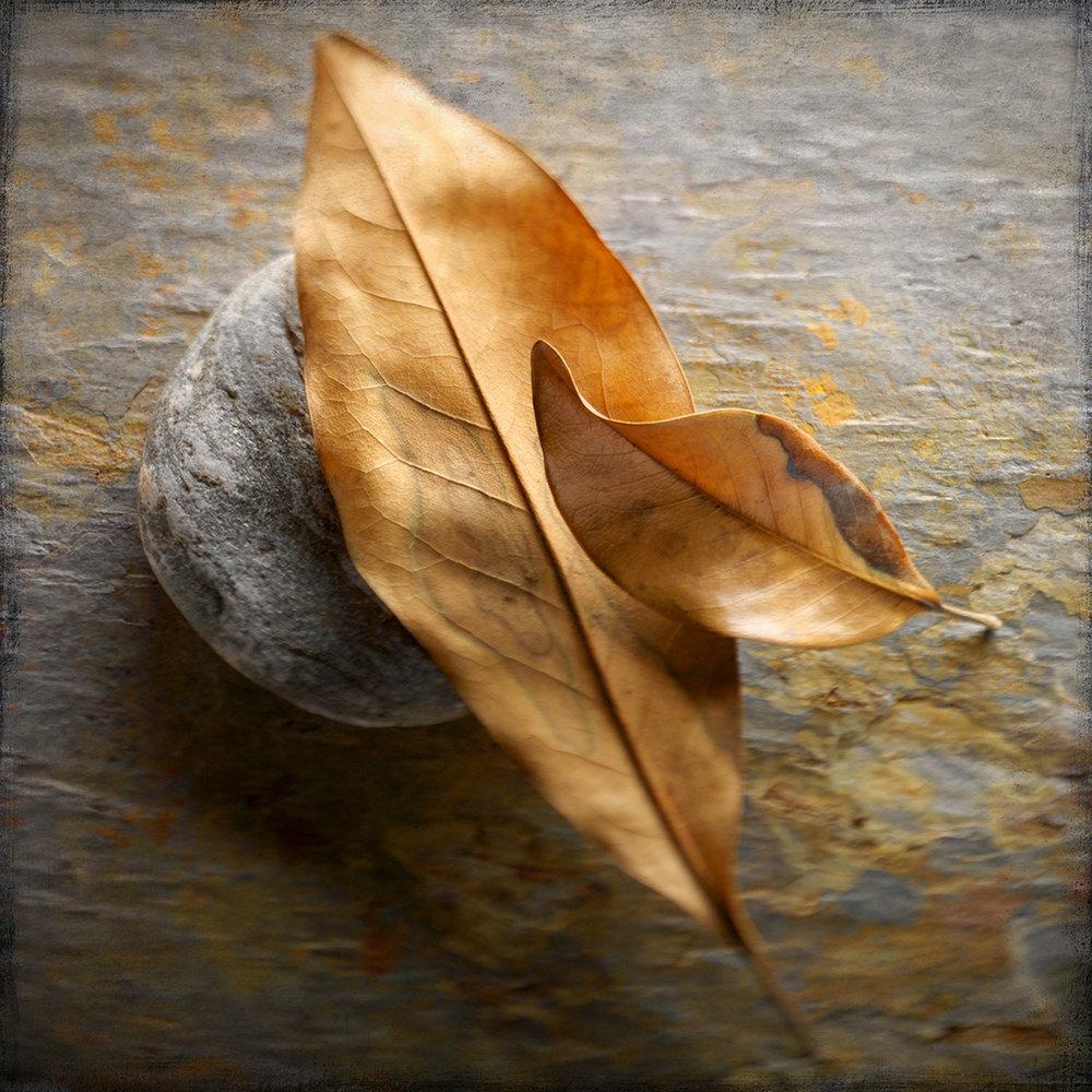 Magnolia Leaves On Stone