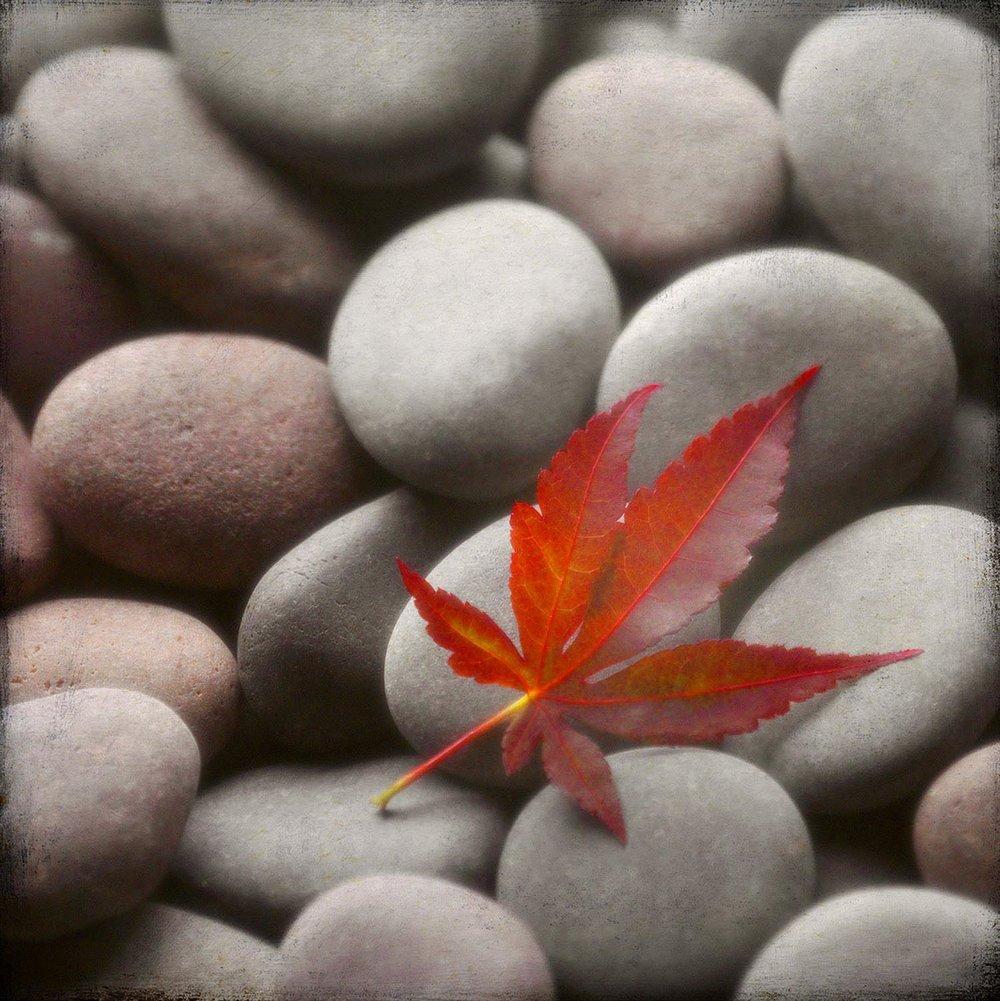 Leaf On Stones