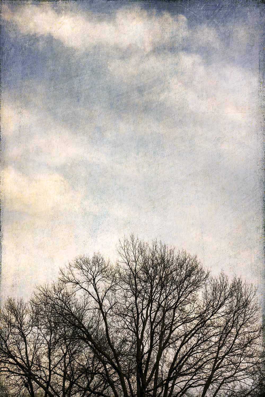 Tree Top Sky