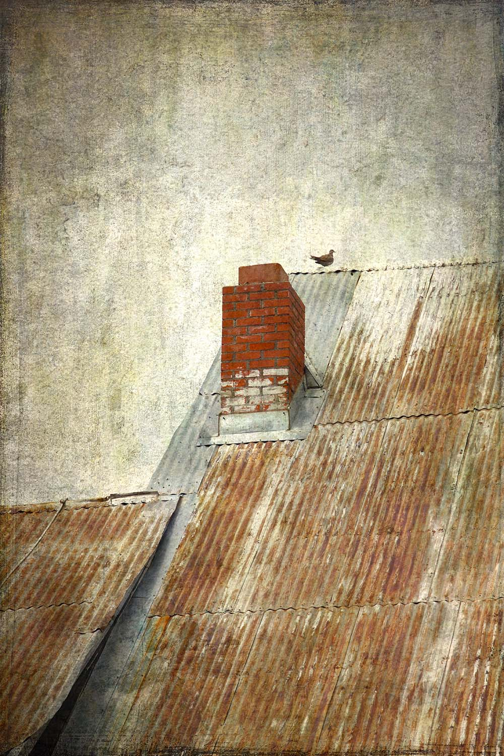 Dove On A Tin Roof