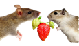 Rats and Berries