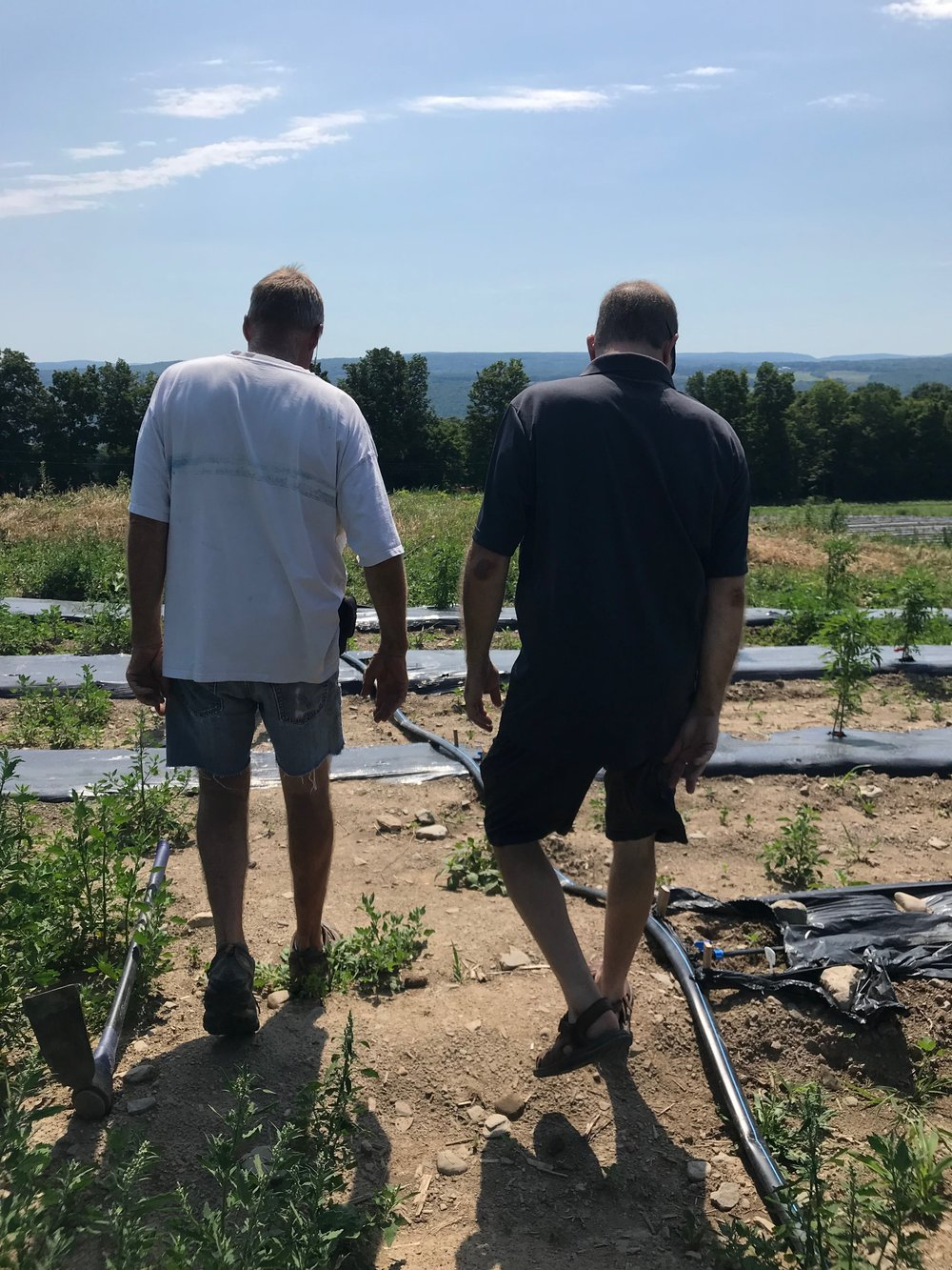 2018 Farm Bill Brings Attention to Hemp  -