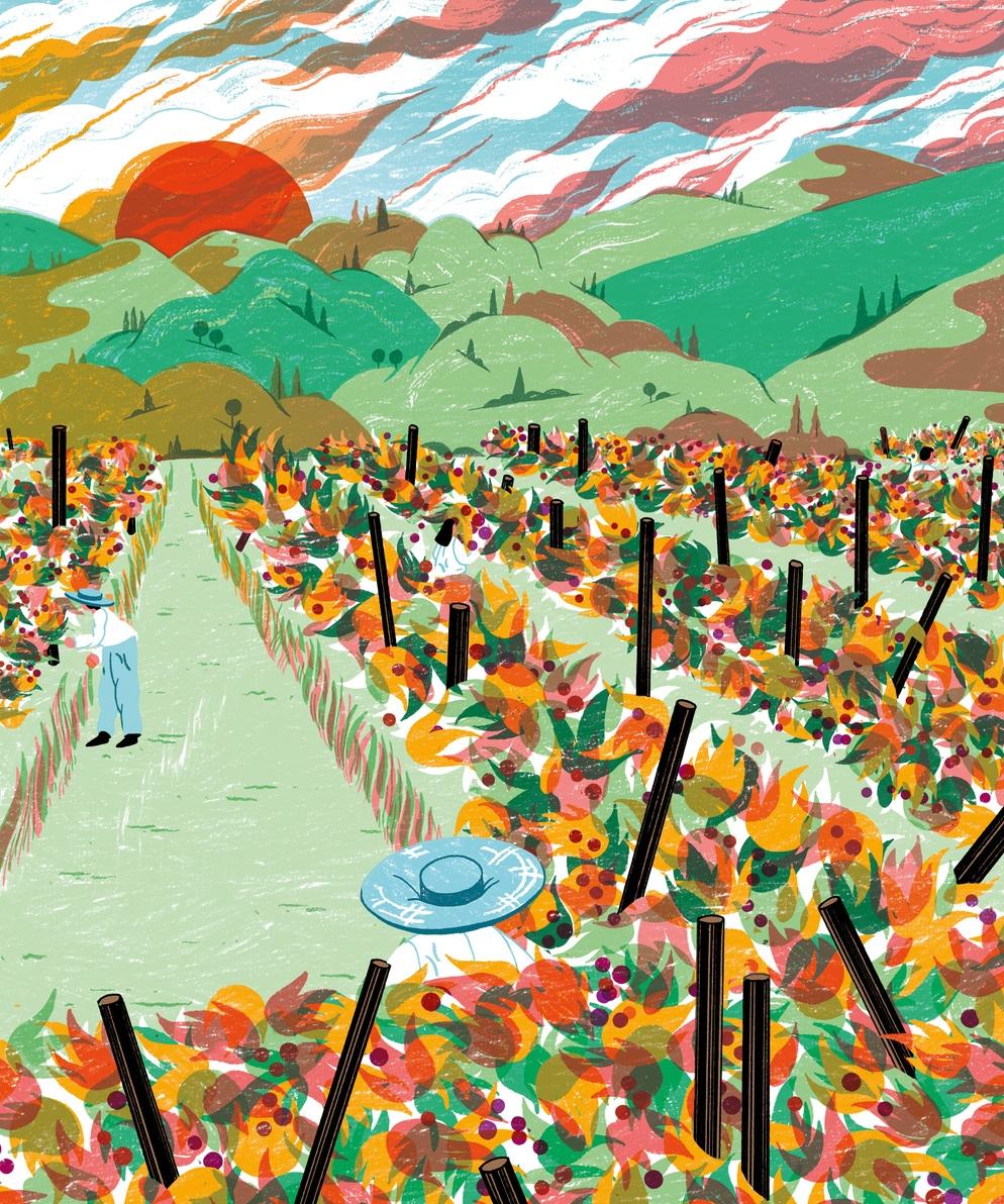 Vineyard-insta.jpg
