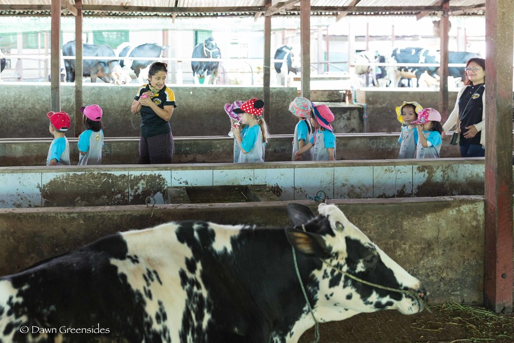 Farm-4.jpg