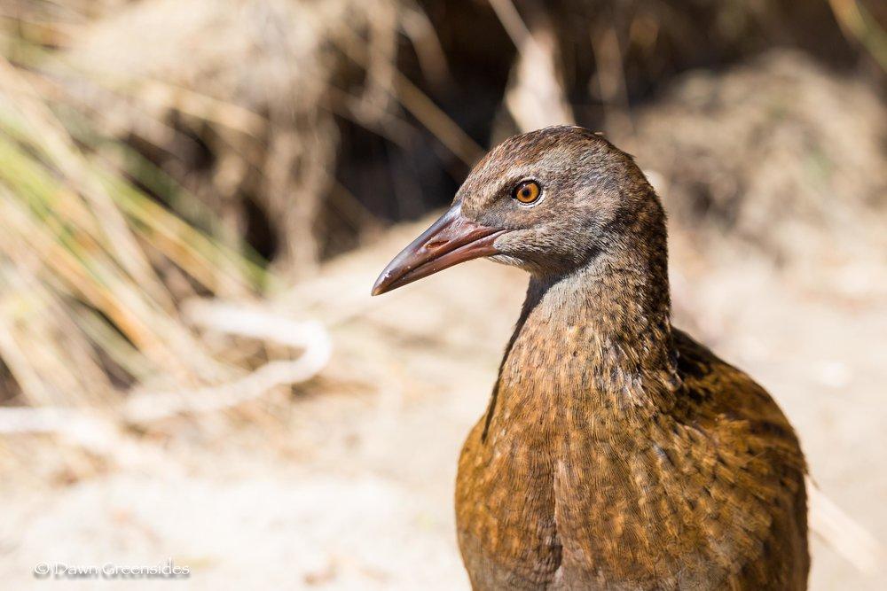 Birds-12.jpg