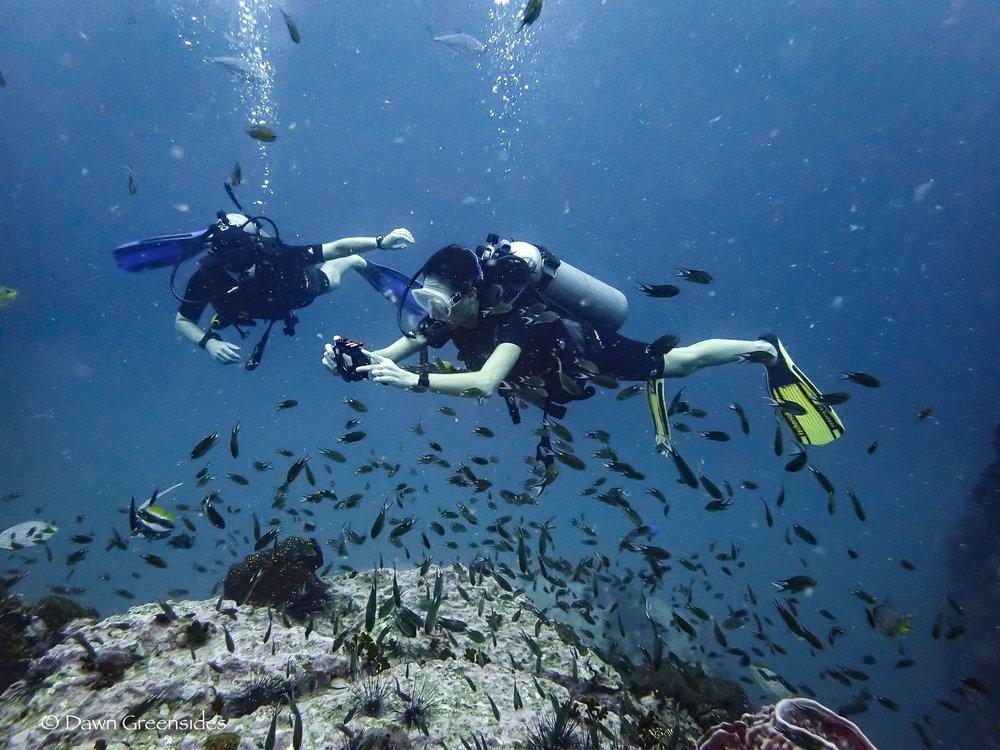 Diving-6.jpg