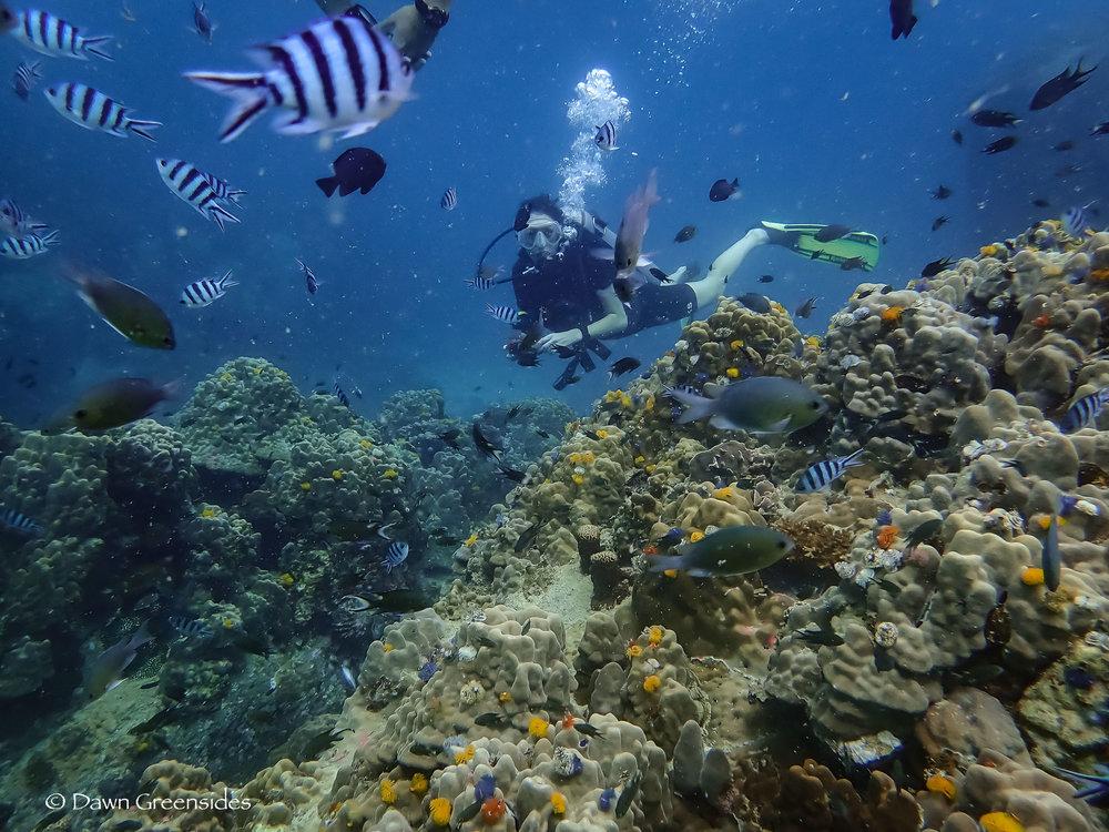 Diving-10.jpg