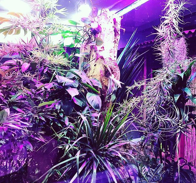I found some new inspiration in the #fovarosiallatesnovenykert ( #budapestzoo ) 🌿🌌 . . . . #plantstagram#crazyplantlady#tropical#vegetation#blooming#plantsmakepeoplehappy#contemporaryartist#instagallery#artistoninstagram#bevisuallyinspired#mixedmediaart#plants#leafs#purple#neon#colorpop#violet