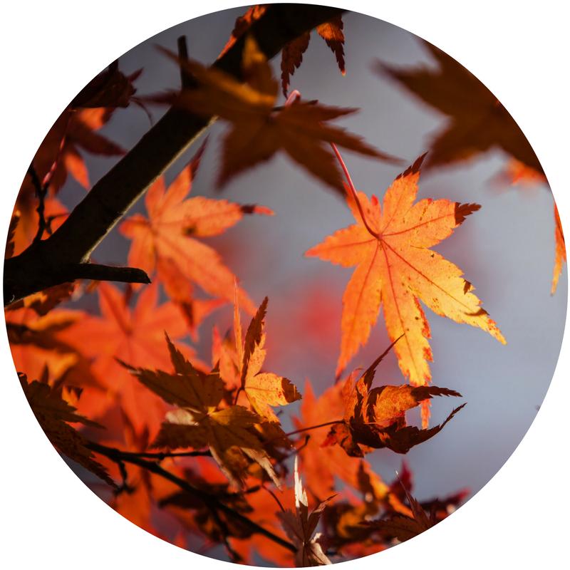 tree_circle.png