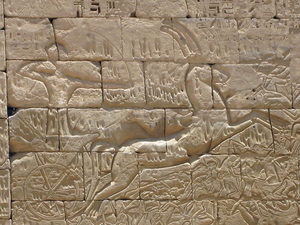 egypt-luxor-chariot-archer-hieroglyph.jpg