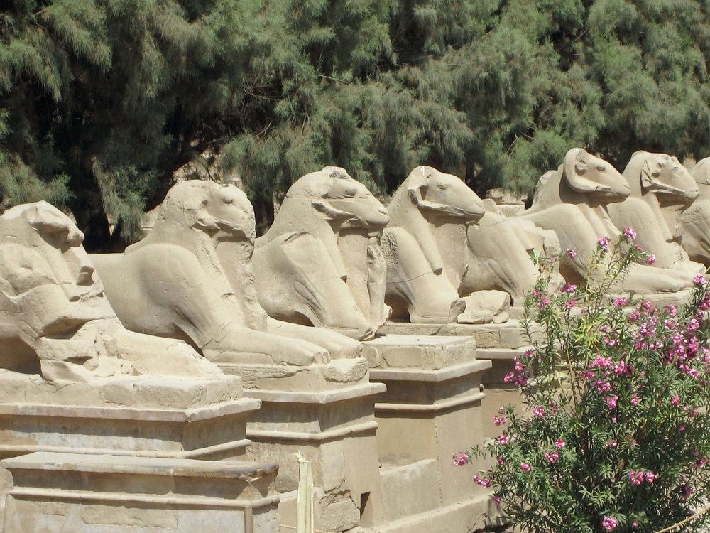 egypt-luxor-temple-rams.jpg