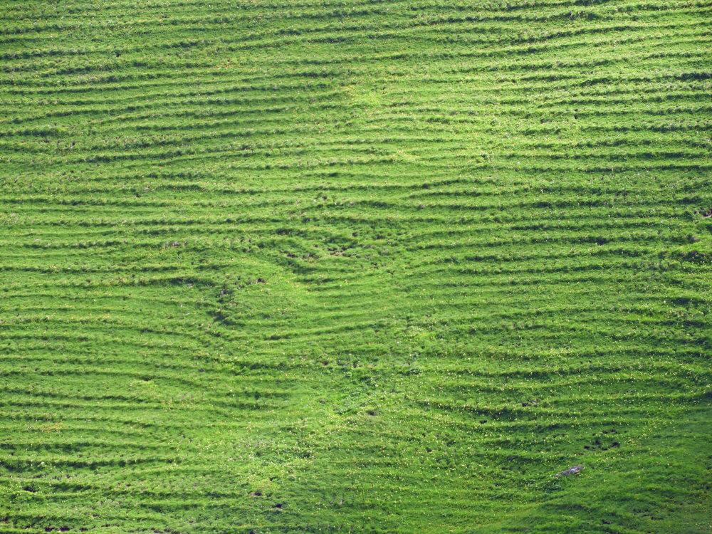 liechtenstein-malbun-hike-green-grass-animal-tracks.jpg