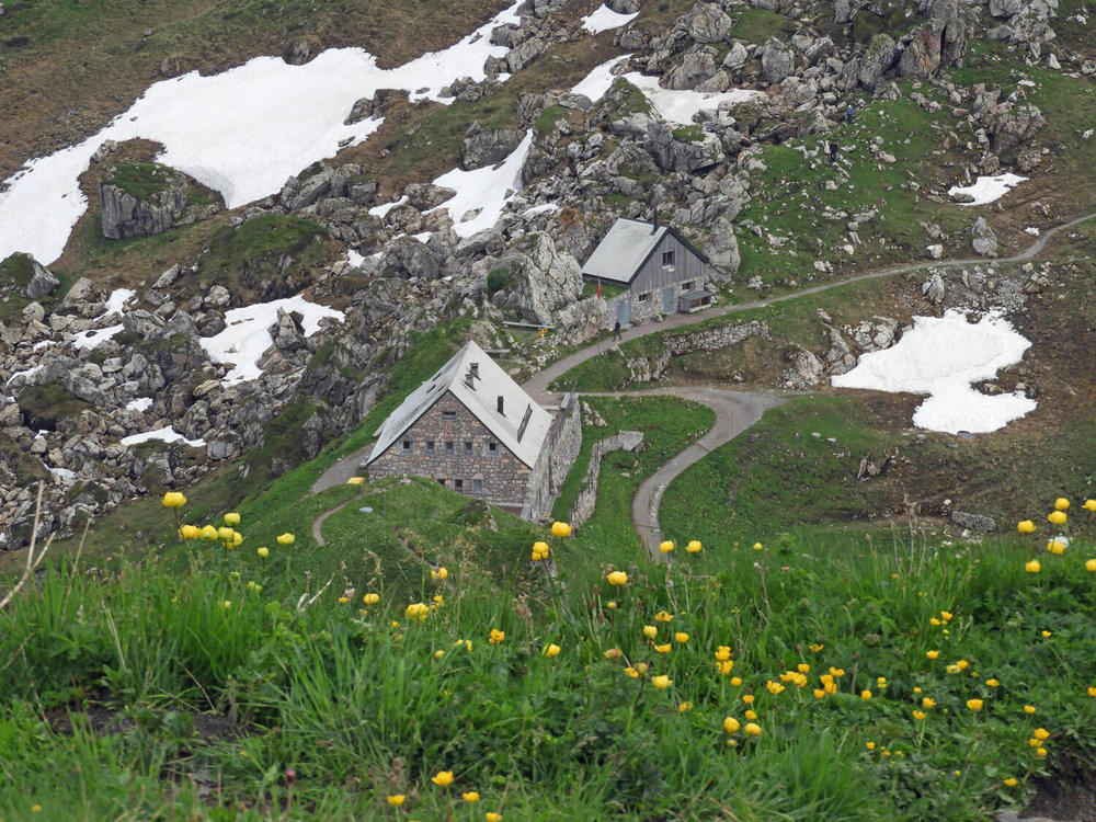 liechtenstein-malbun-hike-snow-flowers.jpg