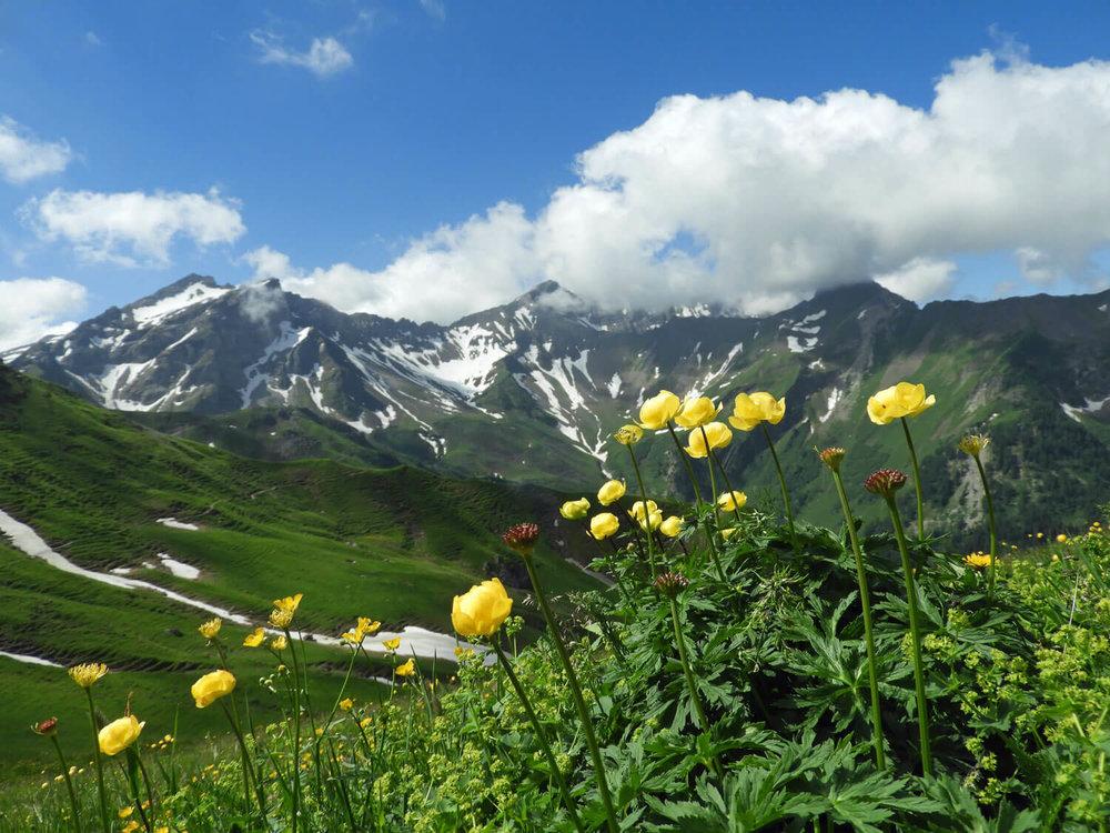 liechtenstein-malbun-mountains-flowers-snow-clouds.jpg